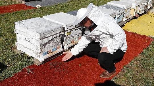 Tarımda Zamansız İlaçlama Arıları Öldürüyor