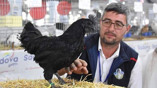 Fuarda 8 Kiloluk Tavşan, 'Gülen' Horoz ve 2 Bin TL'lik Kara Tavuk İlgi Gördü