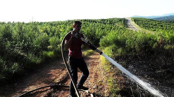 Bayramiç'te Korkutan Orman Yangını