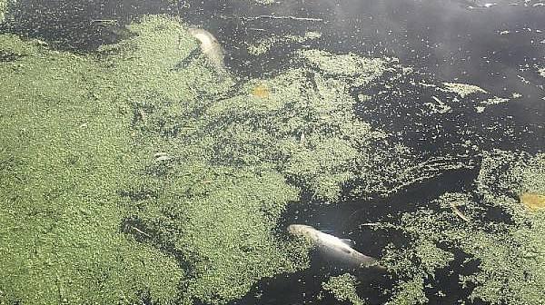 Karamenderes Çayı'nda Balık Ölümlerine İnceleme