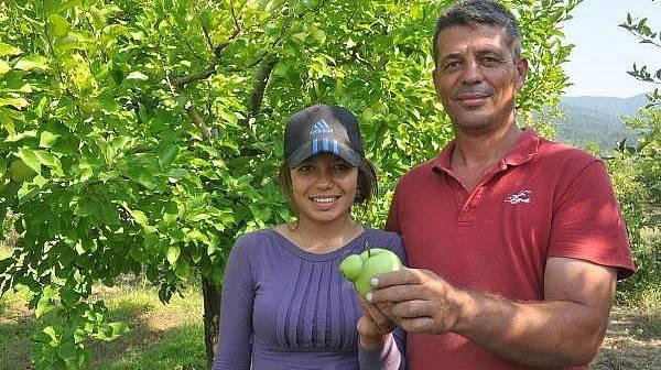 Yarım Asırlık, Hasatta 'Çatal Elma' Bulanı Ödüllendirme Geleneği