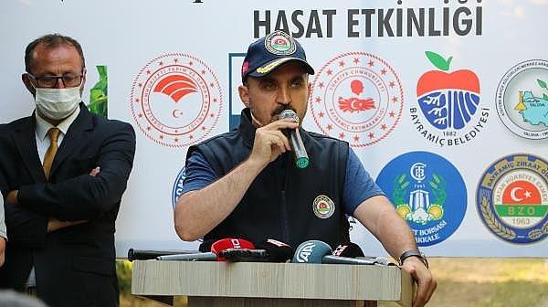 AK Partili Turan, 'Bayramiç Beyazı'nın Hasadını Yaptı