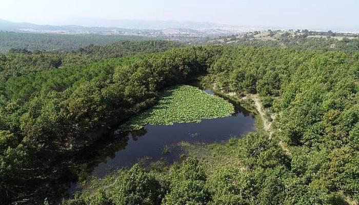 Nilüfer Gölü Güzelliği ile İlgi Görüyor