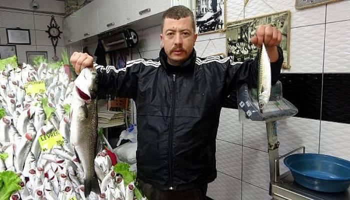 Balık Yokluğu Fiyatlara Yansıdı; Hamsi 35, Palamut 50 Lira
