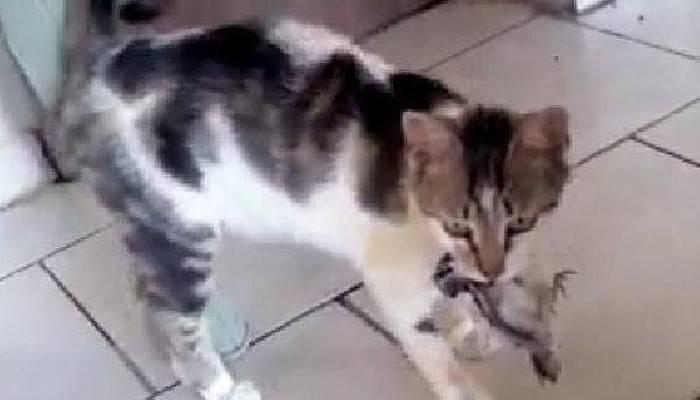 Kedi, Dişleri Arasındaki Kuşu Kaçırdı