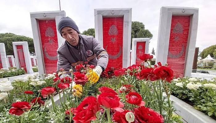 Şehit Mezarlarına Kırmızı-Beyaz 11 Bin Şakayık Dikildi