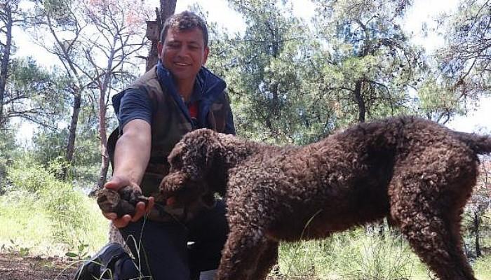 Eğitimli Köpekle Arazide Trüf Mantarı Aradılar