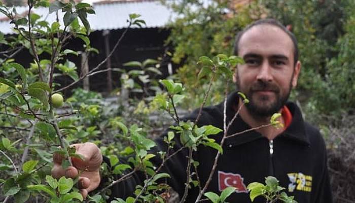 Çiçek Açıp, Meyve Veren Erik Ağacı Şaşırttı