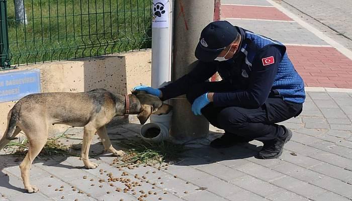 Bayramiç'te, Sokak Hayvanları Unutulmadı