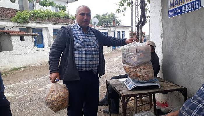 Kaz Dağları'nın 'Altın Mantarı' Köylünün Gelir Kapısı Oldu
