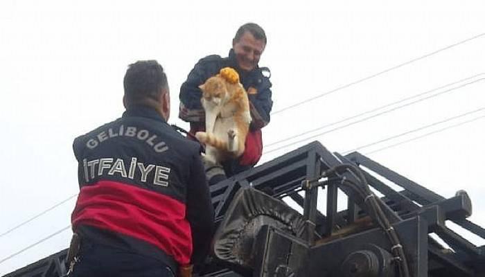 Yazlığın Çatısında MahsurKalan 20 Kiloluk Kediyi İtfaiye Kurtardı
