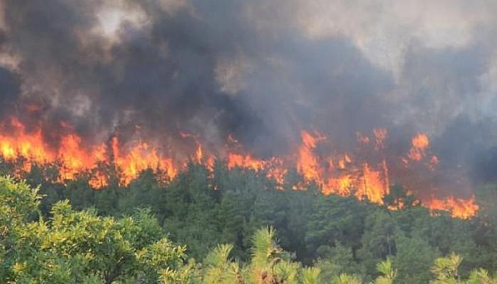 Bayramiç'te Orman Yangını