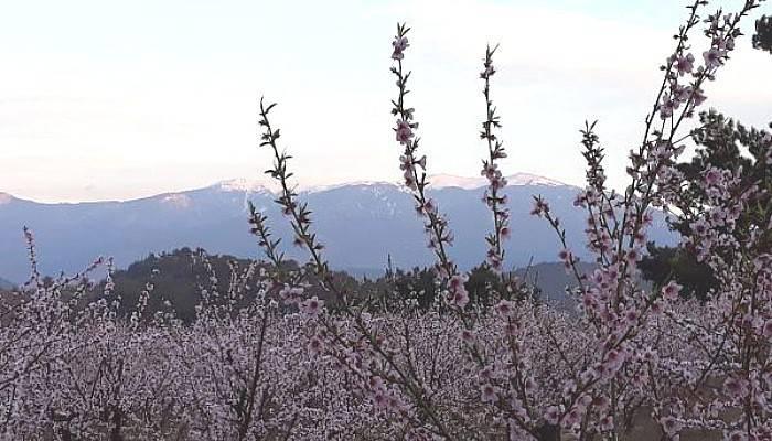Kazdağı'nın Zirvesinde Kar, Eteklerinde Çiçekler