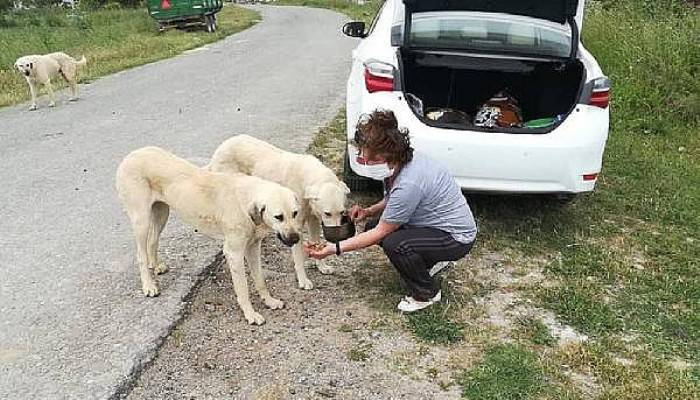 Gelibolu'da Kısıtlamada Sokak Hayvanları Unutulmadı