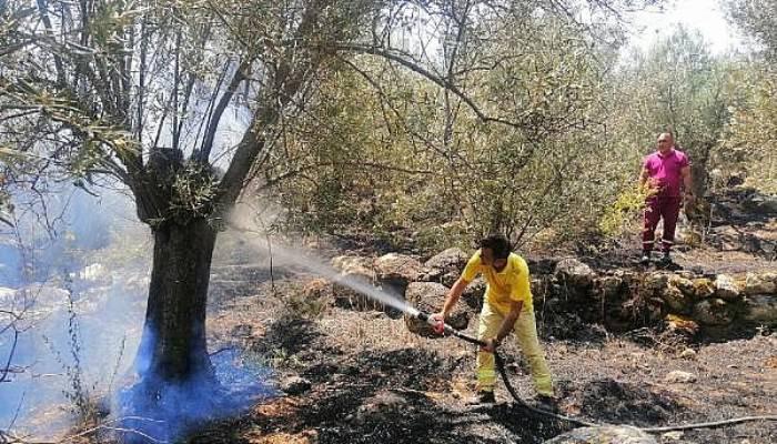 Zeytinlik Yangınında 5 Dönüm Alan Zarar Gördü