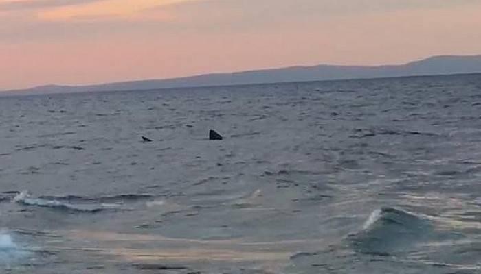 Saros'ta '7 Metrelik' Köpekbalığı Cep Telefonu Kamerasında