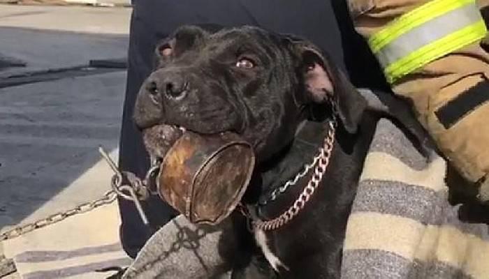 Dili Konverse Kutusuna Sıkışan Yavru Köpeği İtfaiyeciler Kurtardı
