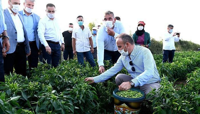 Turan, İşçilerle Birlikte Biber Topladı