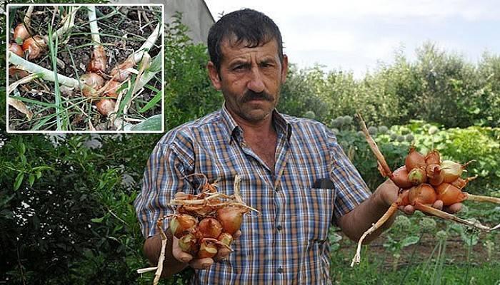 Bayramiç'te Hasadı Yapılan Soğanlar Görüntüsüyle Şaşırttı