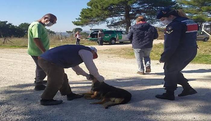 Biga'da 4 Köpek Öldürüldü, Ayvacık'ta Bir Köpek ve 3 Yavrusuna Jandarma Sahip Çıktı