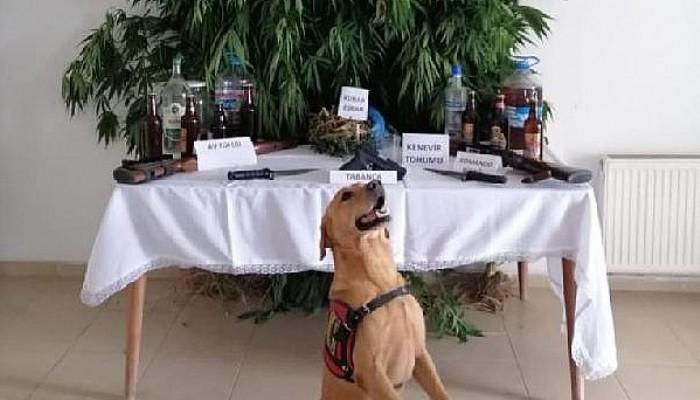 Çanakkale'de Uyuşturucu ve Sahte İçki Operasyonu: 11 Gözaltı