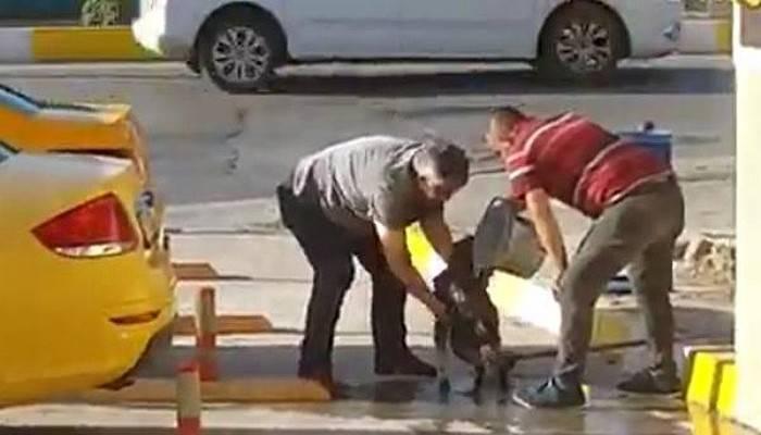 Taksiciler, Sokak Köpeğini Yıkadı