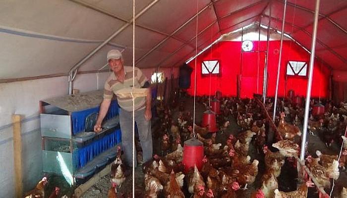 EmekliliğindeBoş Oturmaktan SıkılıncaTavuk Çiftliği Kurdu