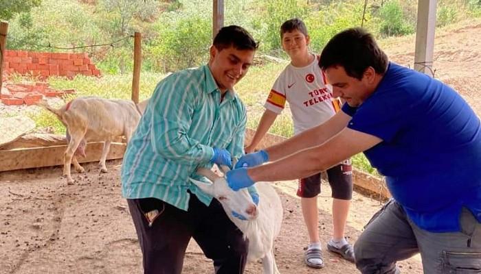Hayvanlara Damla Aşı Yapılıyor