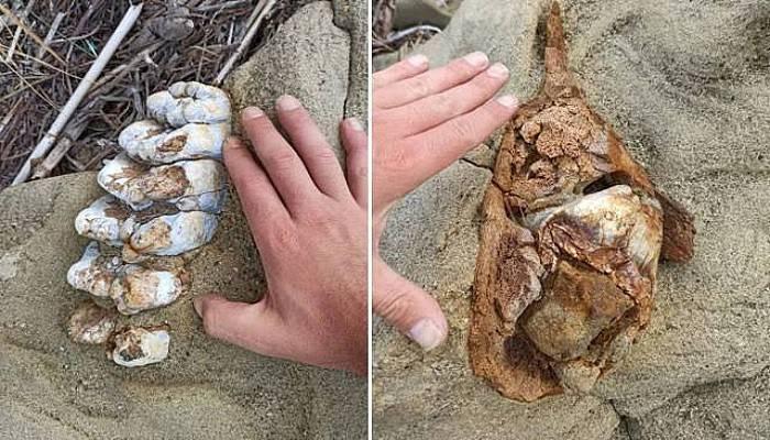 Çanakkale'de 9 Milyon Yıllık Fil Fosili Bulundu