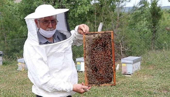 Arı Sempatik Değil Ama Yaşamımızı Sürdürmede Payı Çok Fazla