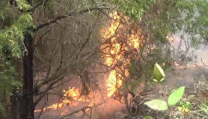 Bayramiç'te Yıldırım Düştü; 2 Hektar Alan Yandı